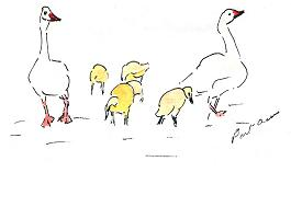 greeting card Duck Family